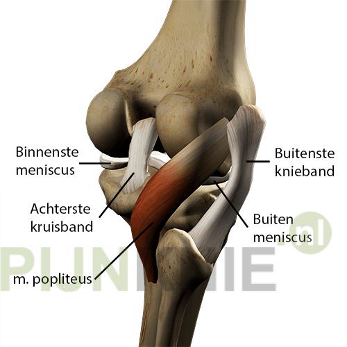 knie verdraaid pijn knieholte