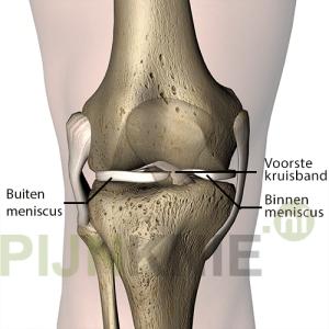 meniscus1