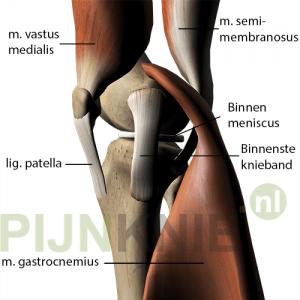 mediale_knie-met-spieren